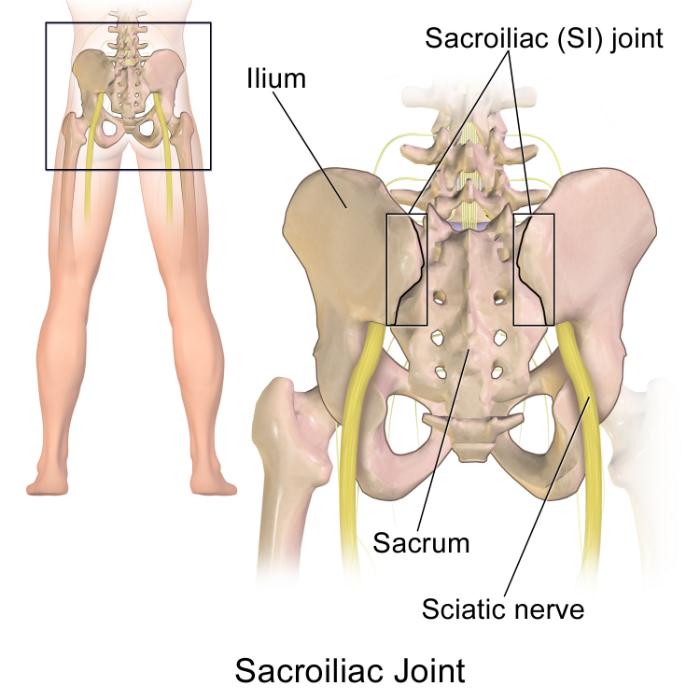sacroiliac joint aka 'back dimples'
